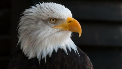 True facts about eagles